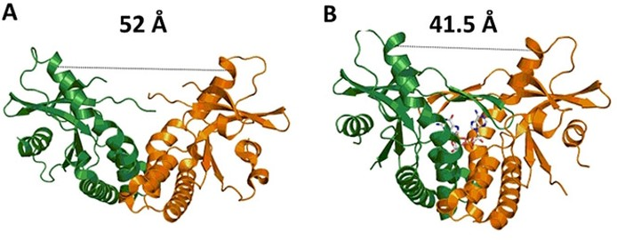 Factors involved in the binding of cyclic dinucleotides to STING protein